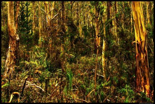 Parrot Wood